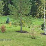 Скорость развития деревьев, кустарников, многолетних и однолетних культур