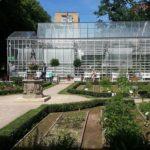 Культуры для выращивания в декоративном огороде