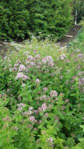 декоративный огород пермь, клумба пряных трав, грядка с травами для чая