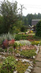 полевой сад ксения гущина