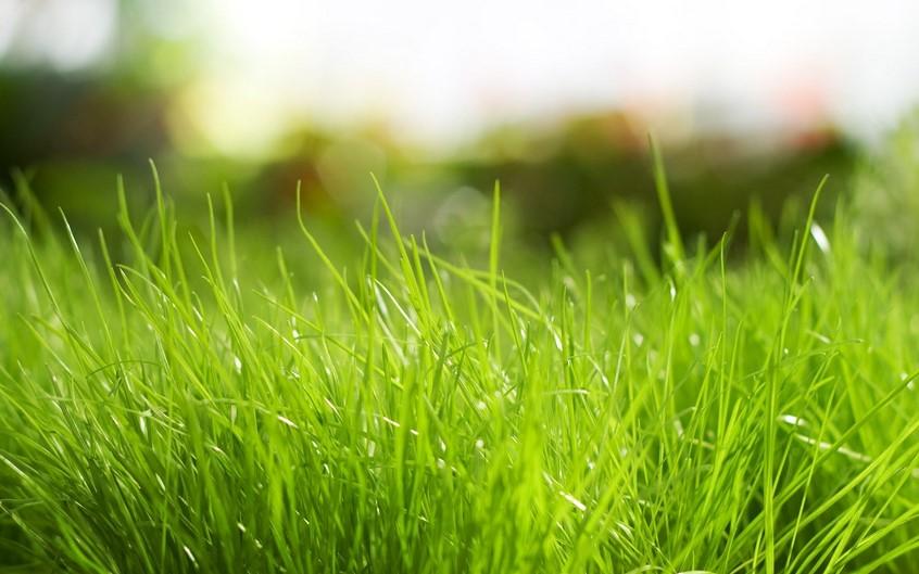 Газон в перми, рулонный газон пермь, посевной газон, сделайте мне газон