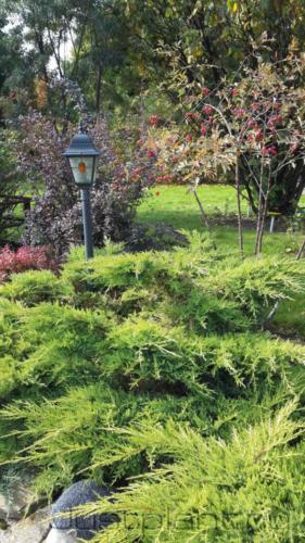 Декоративнолиственные кустарники. Коттеджный поселок Троицкие поляны, Пермский край