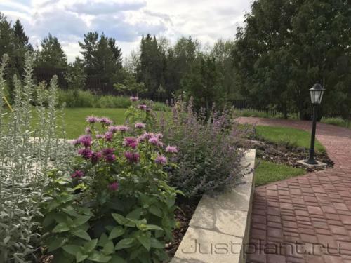 Вид от парадного цветника