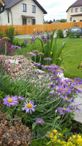 Союз почвопокровных и растений прибрежного вида