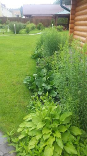 Зелень бордюра в начале июля. Чтобы не отвлекать от буйного цветения рокария в это время, бордюр стоит еще зеленым, через две недели, когда горка уже перестанет цвести, начнется цветение бордюра
