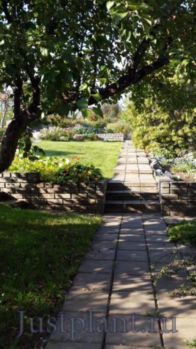 Газон предотвращает массовое расселение сорной растительности, но более требователен в уходе, чем посевные цветники или покров из устойчивых многолетников