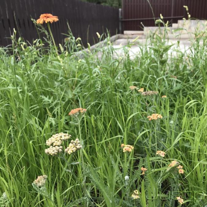 Через месяц после окончания работ, цвели только многолетние растения
