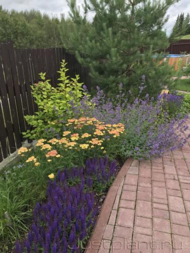 Цветение в начале июля