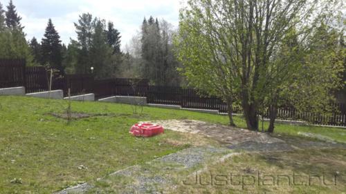 Существующий взрослый сад с построенными дорожками и площадками