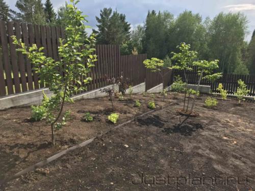 Подготовка основания под газон. Устройство посевного цветника