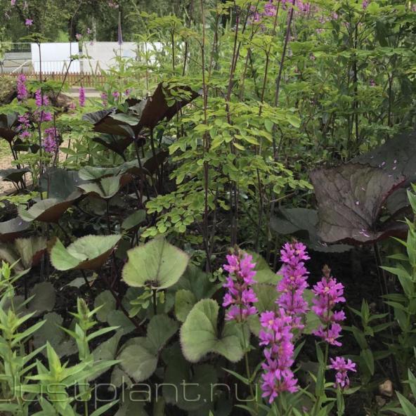 Сочетания растений