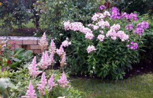 цветники в перми из многолетних растений
