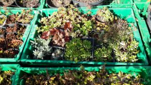 заказать услугу покупка растений для сада