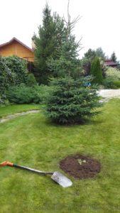 комплексный уход в саду пермь, пересадка растений, купить пересадить растения перми