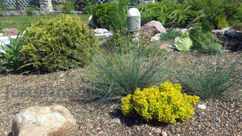 Растения в сухом водоеме