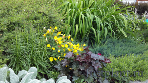 Цветник с применением хвойных и лиственных кустарников