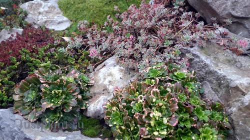 Растения на горке в начале октября