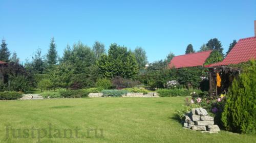 Нижняя терраса сада