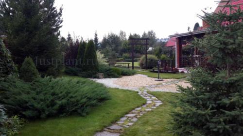 Хвойные в озеленении сада