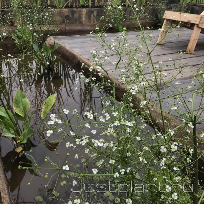 Озеленение декоративного водоема