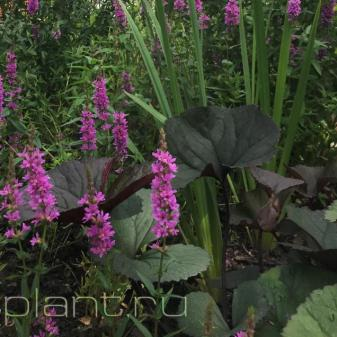 Растения символизируют переплетения страстей в душе человека