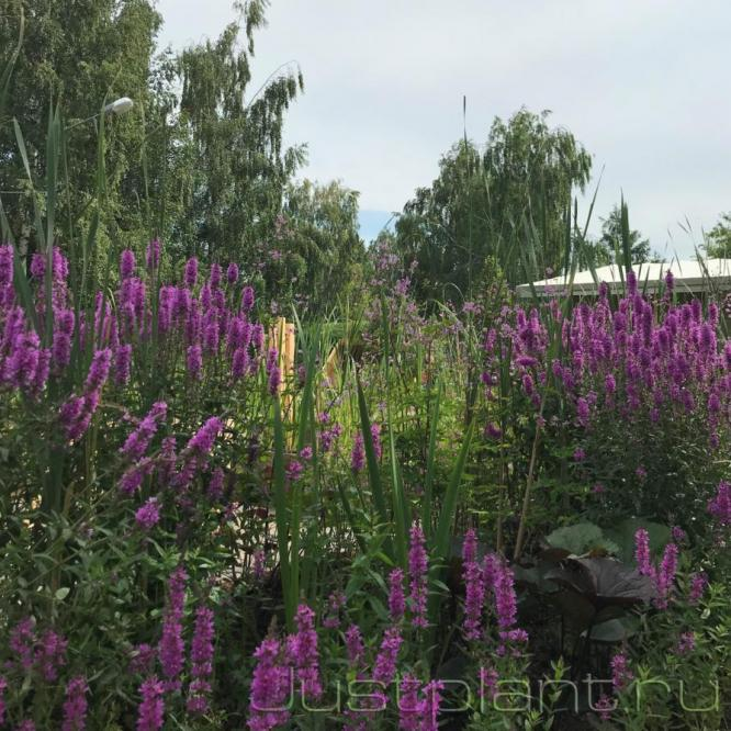 Интеграция сада с окружающей природой