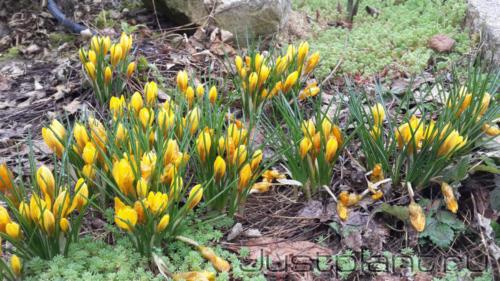Весенний акцент в цветнике. Коттеджный поселок Троицкие поляны