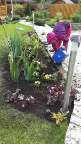 Деление многолетников и подготовка растений к зиме