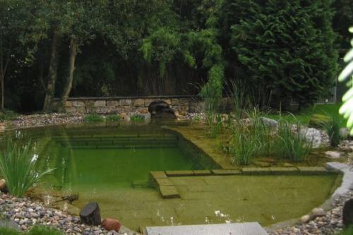 Бассейн-болотце (биоплато)