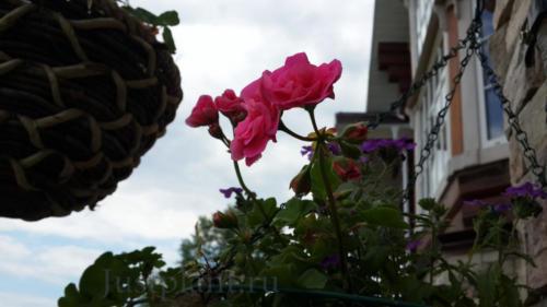 Контейнерный цветник. Хохловка