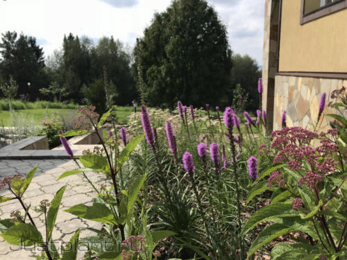Цветник из многолетних растений. Коттеджный поселок Горки (дер. Гари)