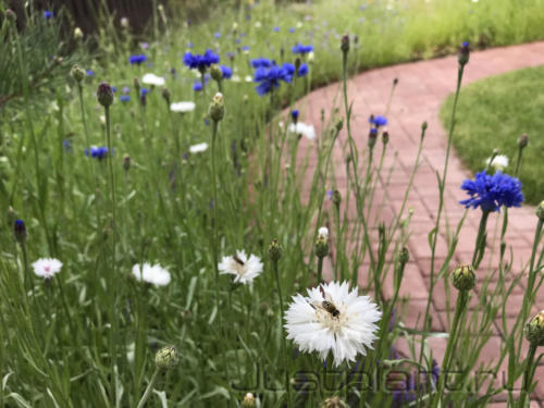 Посевной цветник. Коттеджный поселок Горки (дер. Гари)